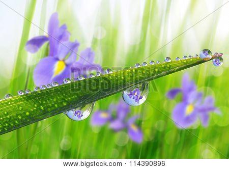 Fresh green grass with dew drops closeup