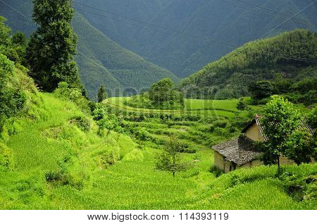 Yunhe Rice Terraces