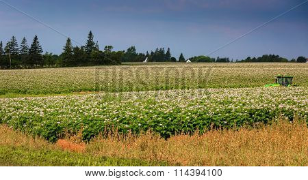 A tractor driving through potato fields in rural Prince Edward Island, Canada