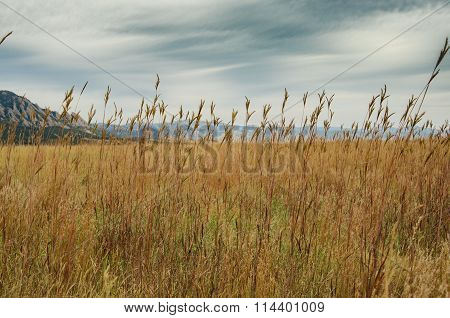 Dry Grasses On A Cloudy Day