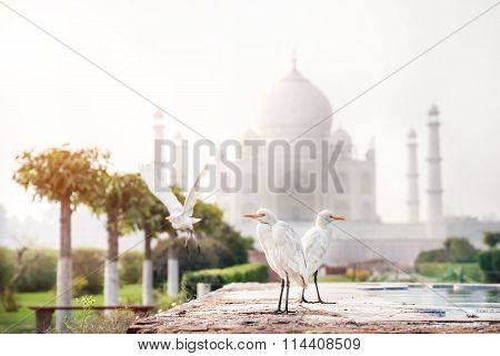 Birds Near Taj Mahal