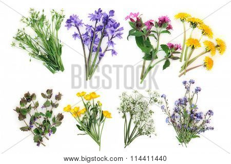 Spring wildflower selection over white background. Stichwort, bluebell, rose campion, dandelion, ground ivy, buttercup, cow parsley and forget me not. Left to right, top then bottom row.