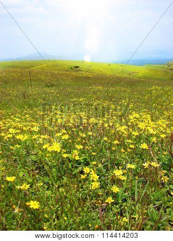 Bright Grasslands
