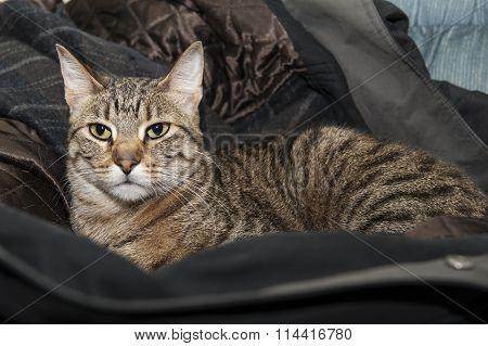 Cat In The Coat