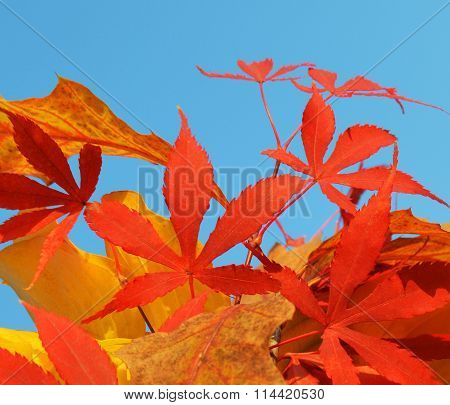 Bouquet Of Milticolor Leaves
