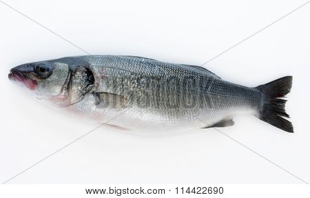 Whole salmon fish isolated on a white studio background