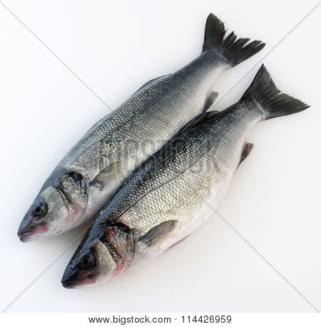 two Whole salmon fish isolated on a white studio background