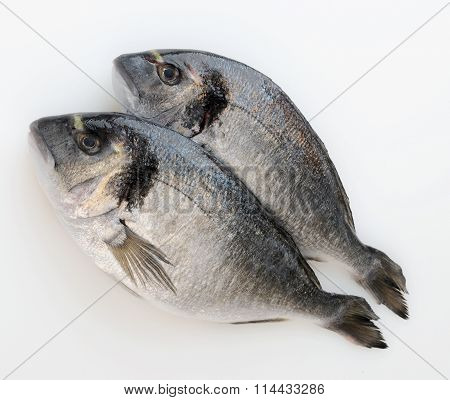 two Fresh Sea Bream (pagellus) Isolated On White Background