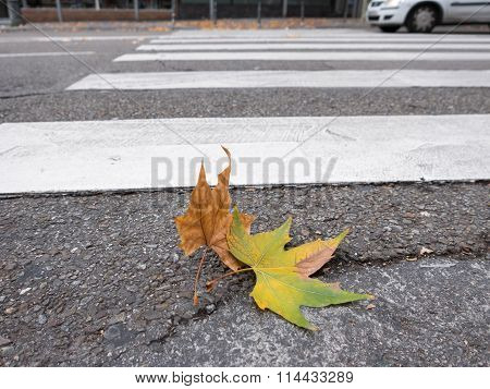 Brown leaf, zebra crossing with wind and car