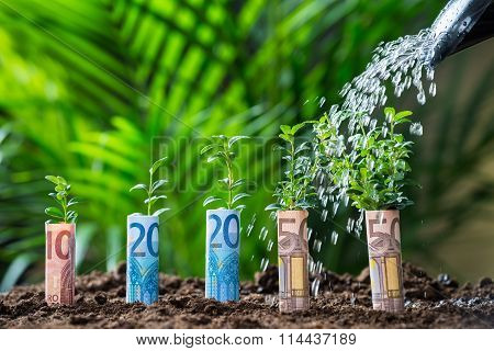 Water Being Poured On Plants Wrapped With Euro Bills