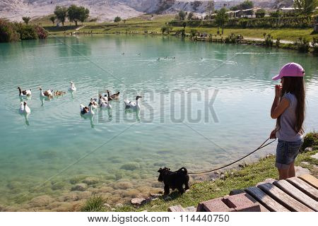 Little Girl With Her Dog Are Watching At Floating Geese