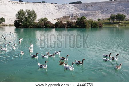 Lake In Pamukkale, Turkey