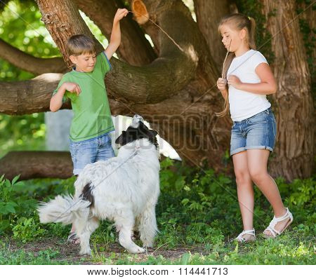 Children Playing With Dog In Garden