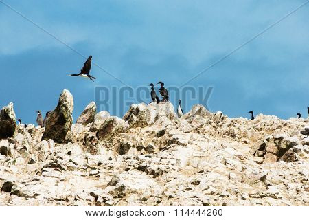 Seabirds on the rockface in the Ballestas island, natural park. Peru