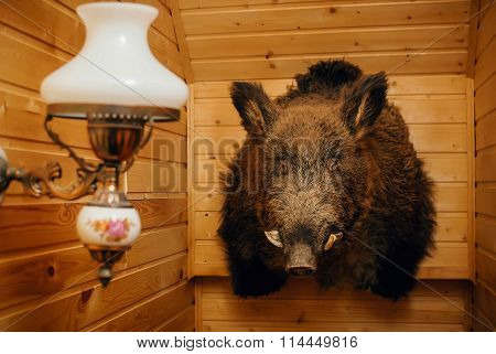 Stuffed Wild Boar On A Wooden Wall