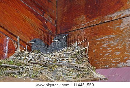 Three Bird In A Nest