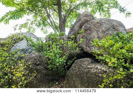 Closeup Group Of Big Rock For Decorate With Green Plant In The Garden Texture Background In The Afte