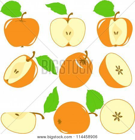 Orange color apples slices, collection of vector illustrations on a transparent background