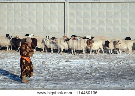 Ulaanbaatar, Mongolia - Dec, 03 2015: Mongolian Man In National Dress And A Flock Of Sheep At A Fenc