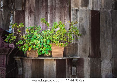 Green Plant Pot Place On Wooden Wall