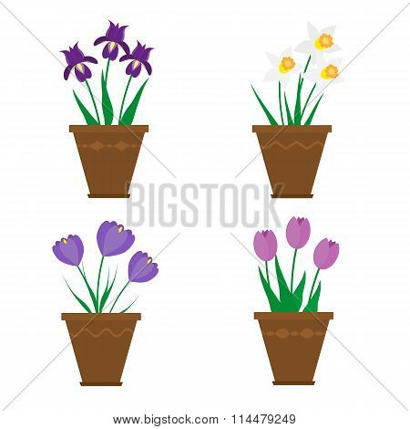 Spring flowers in pots isolated on white background.