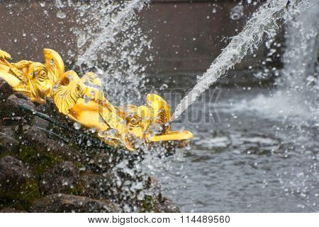 Peterhof. Russia. The Fishes Fountains