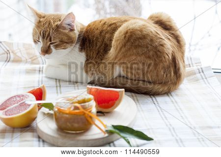 The red cat and orange jam in glass jar, selective focus.