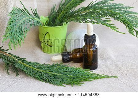 Thujas Essential Oil