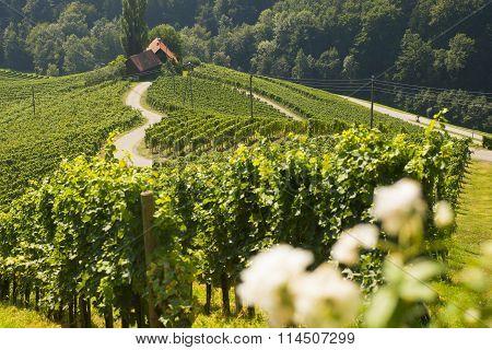 Wine road, shape of a heart, Slovenia