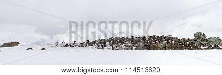 Panorama Of Ronge Island, Antarctica