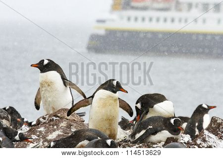 Ronge Island, Antarctica Rookery With Cruise Ship