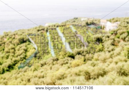 Defocused Background With Cultivated Fields Near Sorrento, Italy