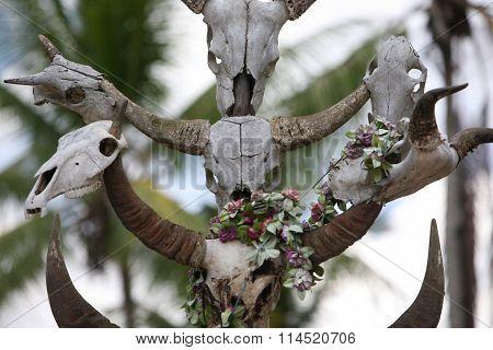 Asia East Timor Timor Leste Raca Graveyard