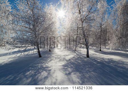 Frozen Tree Farm
