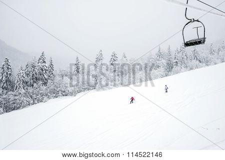 Ski slopes in the coniferous forest in 'Kolasin 1450' mountain