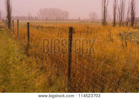 Rainy Prairie In Autumn