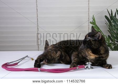 Female Tortoiseshell Tabby Cat waiting on the exam table for the vet, stethoscope on the table