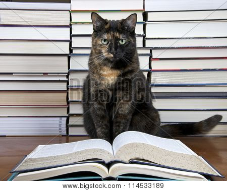 Torbie Tourteshell Tabby Cat sitting in front of piles of books