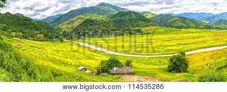 Rice fields in northwest region, Vietnam