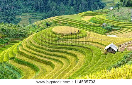 The farmers go to work on on terraced fields