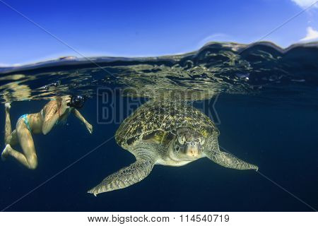 Sea Turtle and young woman snorkeling