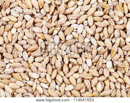 Raw Pearl Barley Seeds