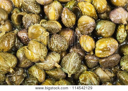 Many Green Pickled Capers Close Up