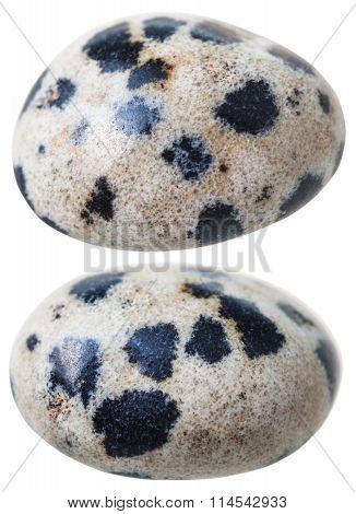 Two Dalmatian Jasper (dalmatian Stone) Gemstones