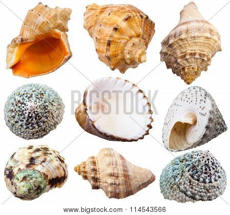 Set Of Spiral Shells Of Sea Mollusc Snails