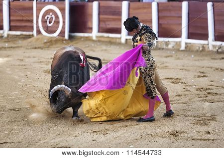 Morante de la Puebla fighting with the cape in its first bull of the evening in Ubeda bullring