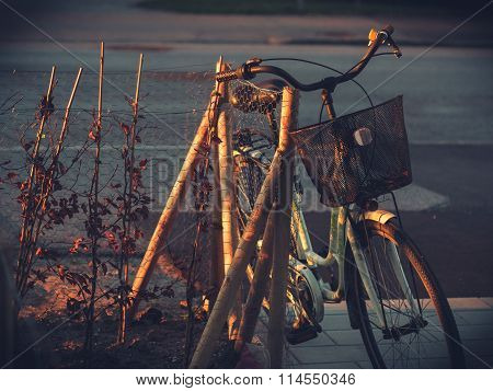Aged Old Ladies Bicycle in Morning Light