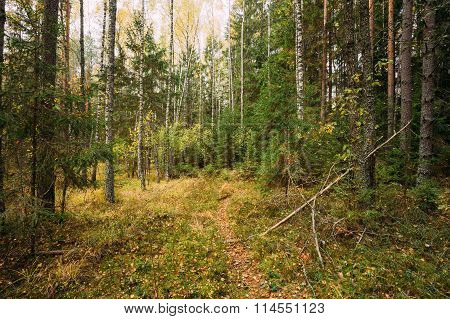 Path lane walkway through autumn forest
