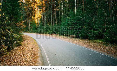 Winding asphalt road path walkway through autumn forest