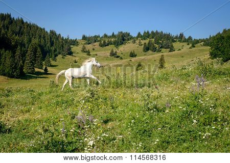 Mountain Landscape With Galloping White Horse